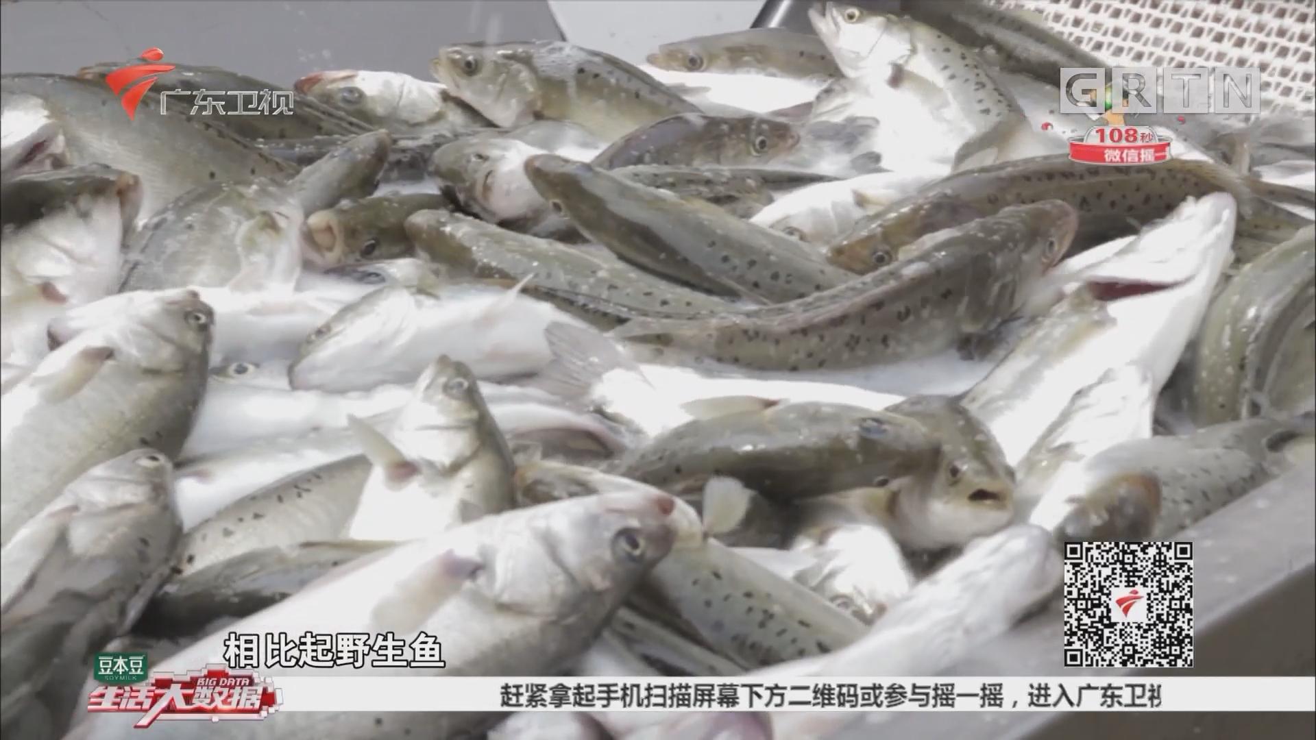 国家地理标志产品——白蕉海鲈鱼