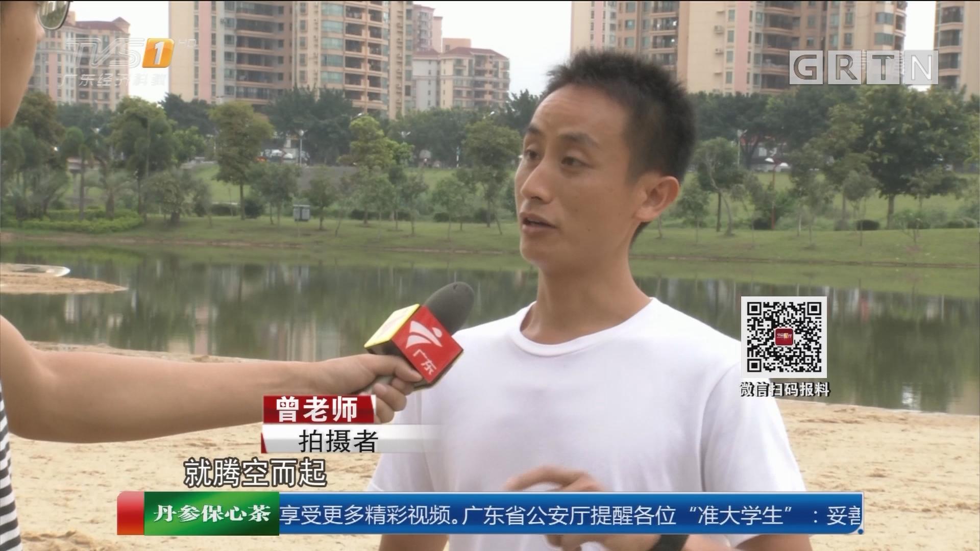 广州从化文化公园:公园人工沙滩上 惊现一米长蛇