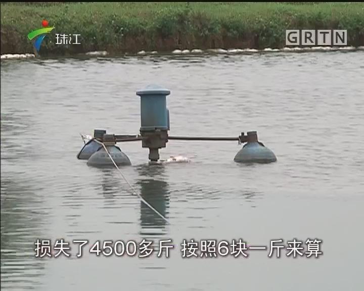 清远:疑因邻里纠纷 塘鱼惨被害死