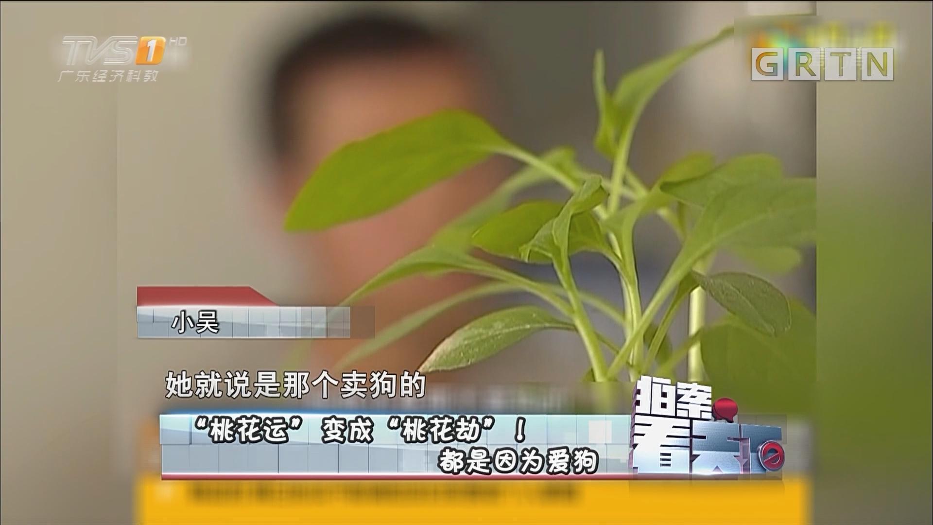 "[HD][2017-06-16]拍案看天下: ""桃花运""变成""桃花劫""! 都是因为爱狗"