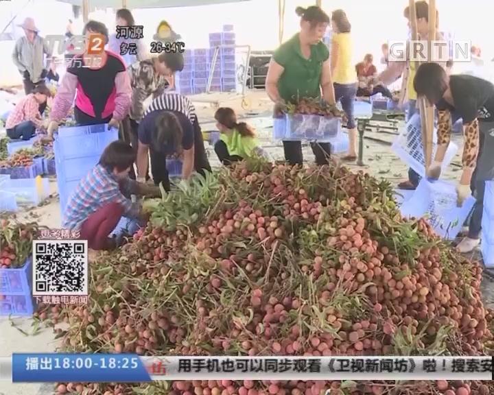 阳西上洋:玉荷包荔枝价格创近年新高