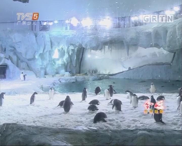 [2017-06-28]南方小记者:珠海长隆海洋王国再次成功繁育帝企鹅