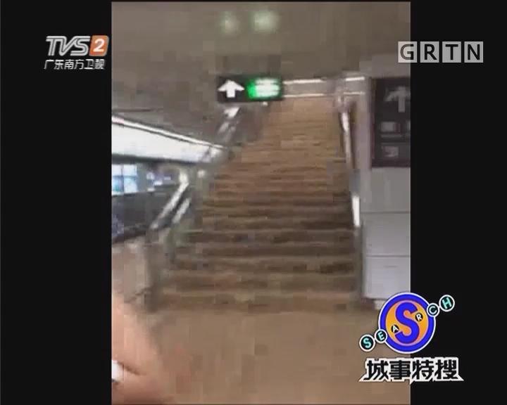 """关注""""苗柏"""":广州""""静鸡鸡"""" 深圳""""水泱泱"""""""