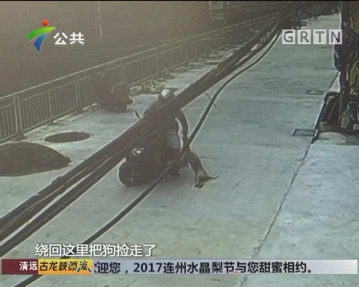 中山:狗只遭贼人偷窃 监控记录全过程