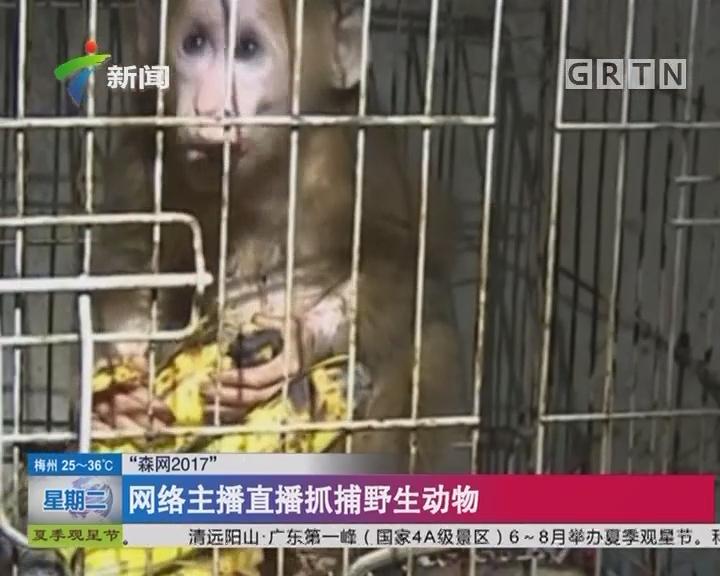"""""""森网2017"""":网络主播直播抓捕野生动物"""