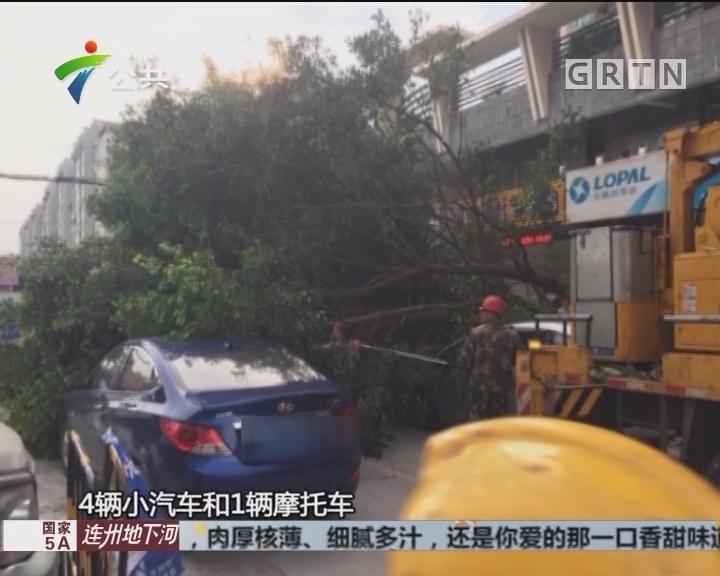 肇庆:又见树倒压车 相关部门组织协商赔偿