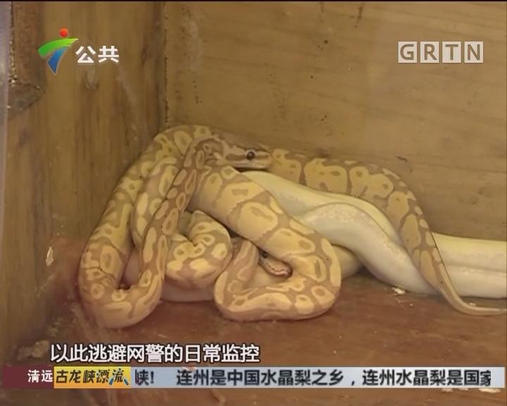 韶关:男子直播捕猎野生动物 被依法刑拘