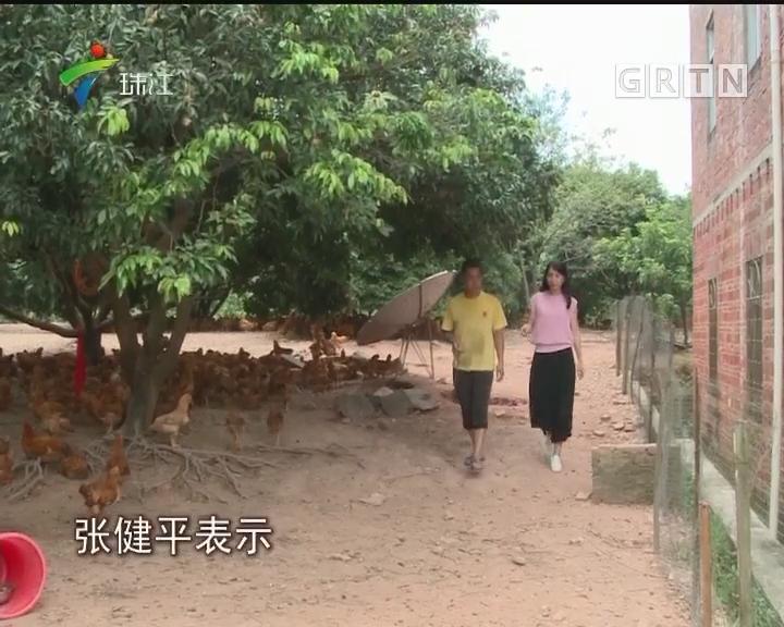 """河源:10万土鸡滞销 村民求""""关注"""""""