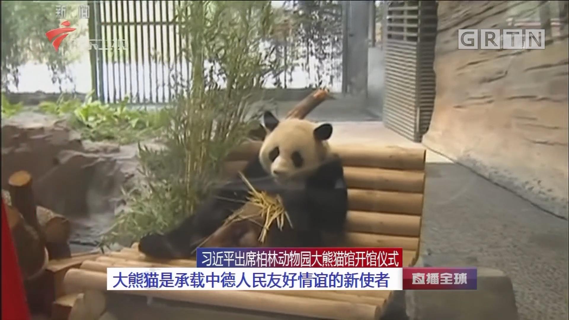 习近平出席柏林动物园大熊猫馆开馆仪式 大熊猫是承载
