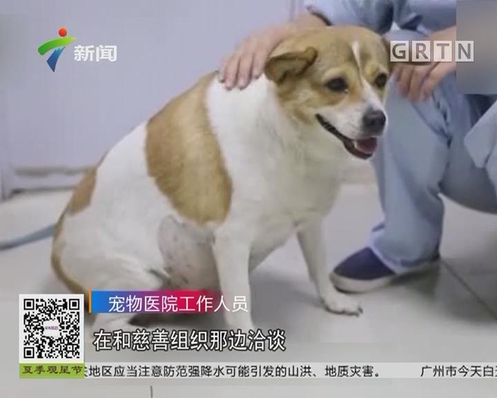 辽宁大连:地铁站里出现疑似怀孕小狗