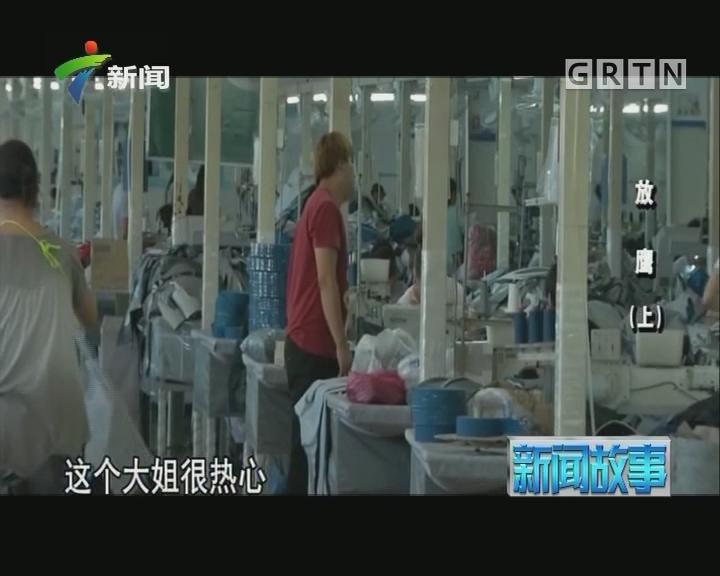 [2017-07-31]新闻故事:放鹰(上)