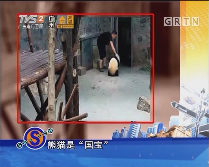 工作人员粗暴对待熊猫?