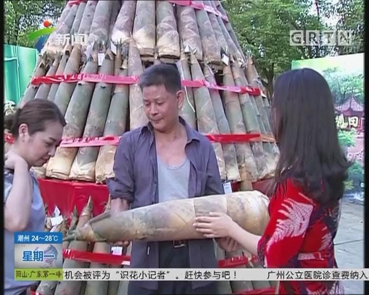 揭阳:笋王出炉 重25斤4两