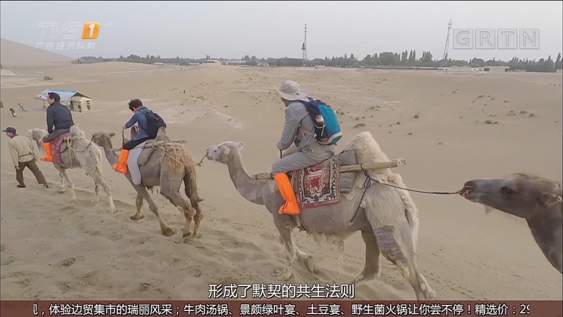 敦煌——骑骆驼