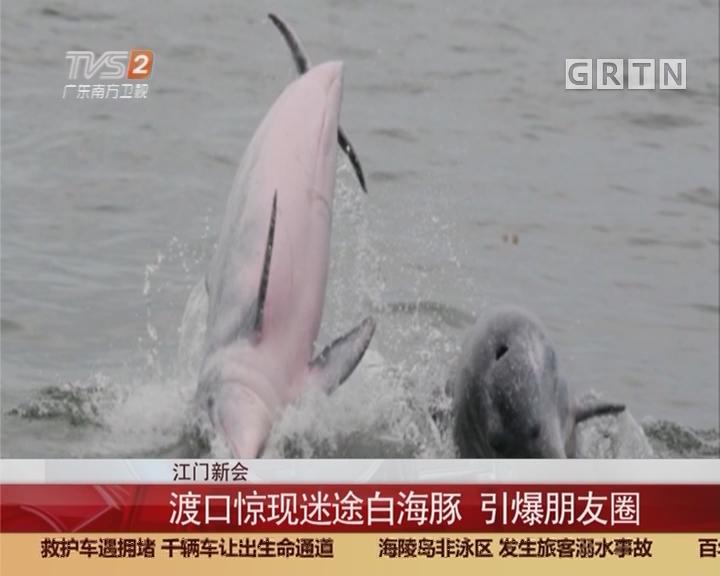 江门新会:渡口惊现迷途白海豚 引爆朋友圈