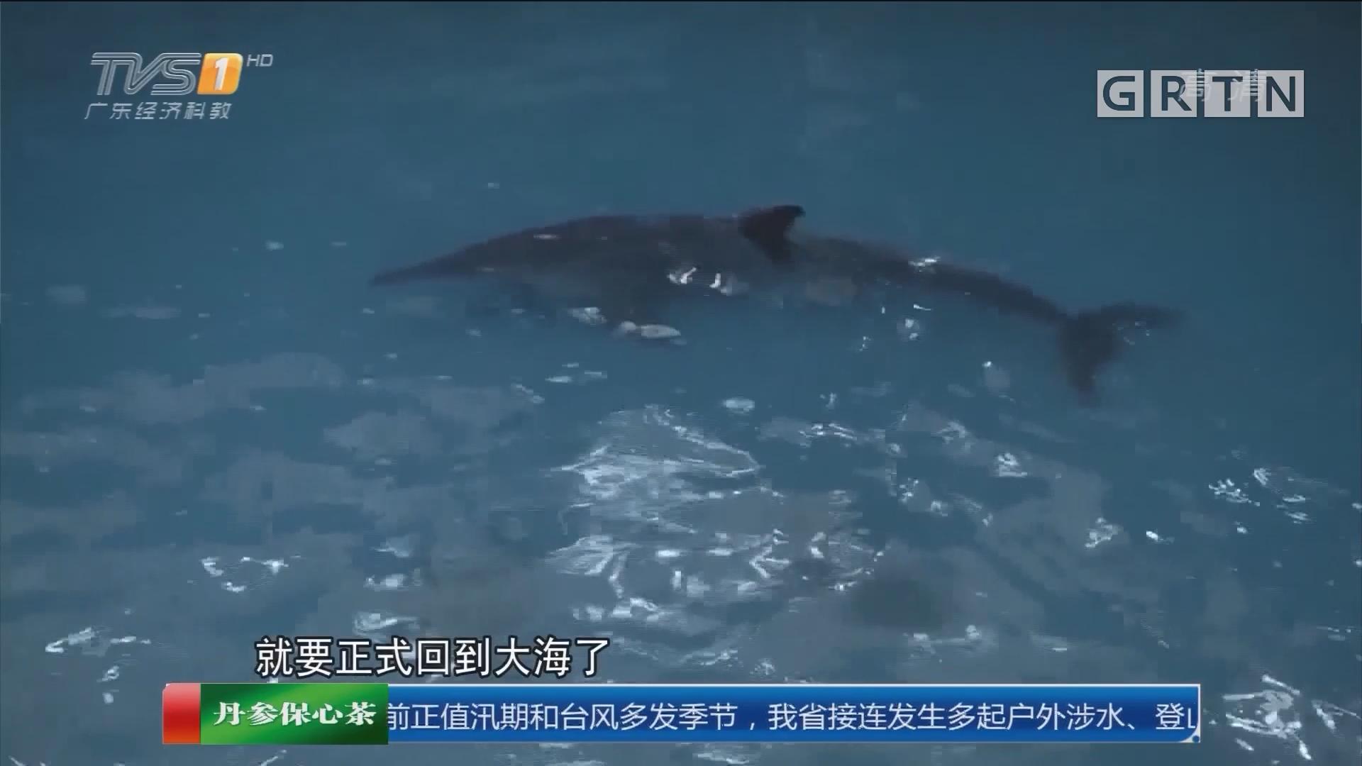 """珠海:联合救助搁浅海豚 """"江江""""康复回家"""