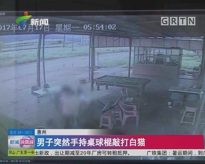 惠州:男子突然手持桌球棍敲打白猫