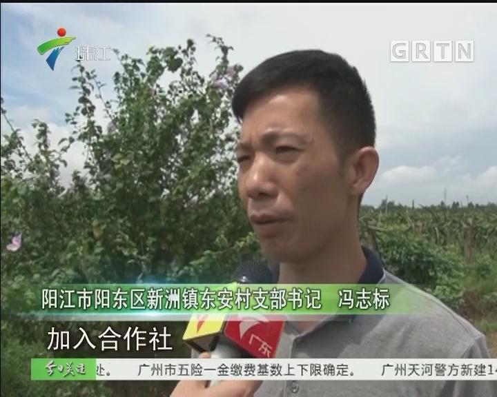 阳江:村民身份信息被盗用 涉案3人被刑事拘留