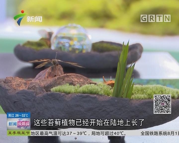 第十九届国际植物学大会:第十九届国际植物学大会在深圳开幕