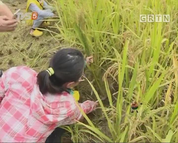 [2017-07-06]南方小记者:丰收季——奔跑吧,米粒!