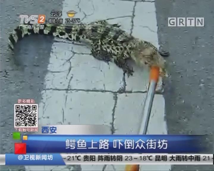 西安:鳄鱼上路 吓倒众街坊