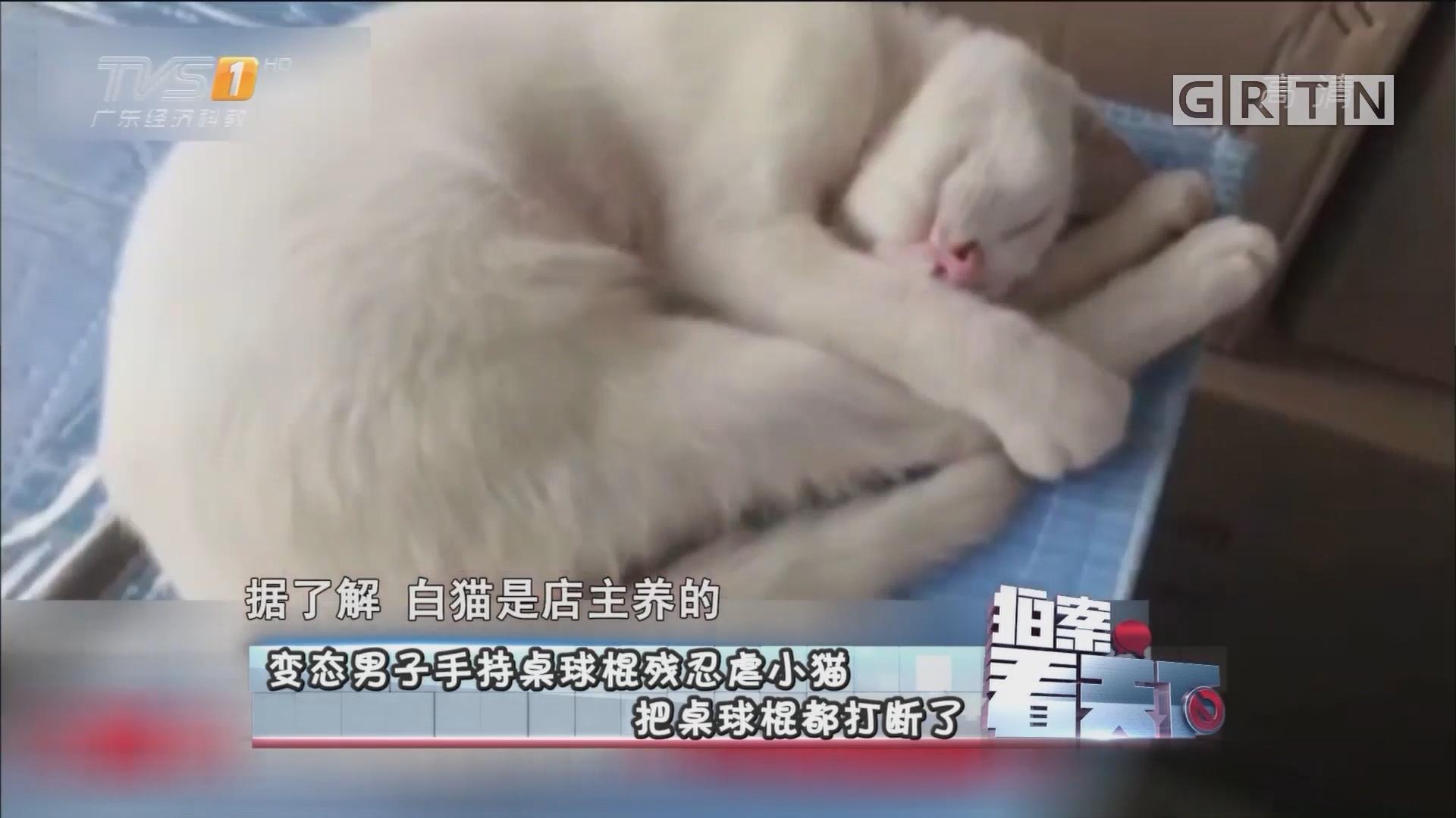 [HD][2017-07-21]拍案看天下:变态男子手持桌球棍残忍虐小猫 把桌球棍都打断了