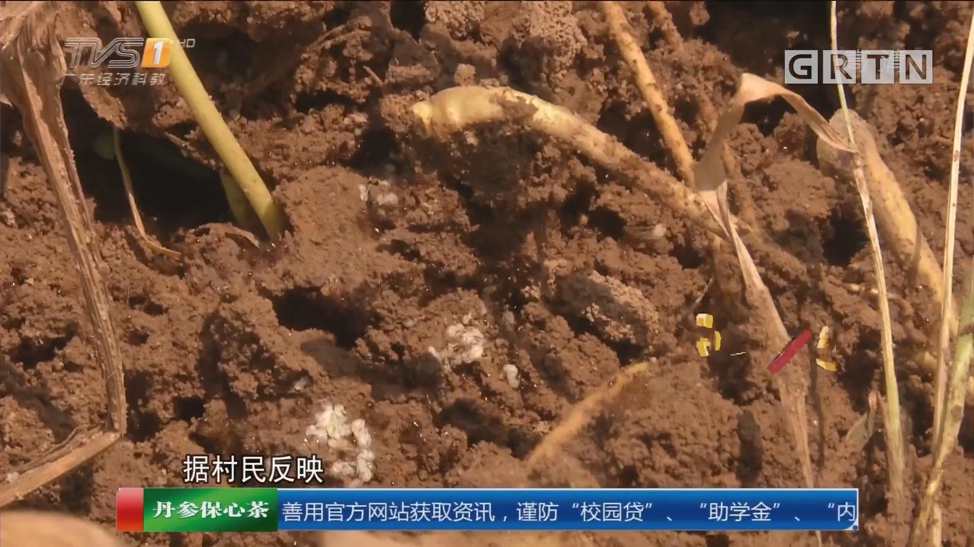 清远英德:红火蚁出没 农忙时节扰民伤人