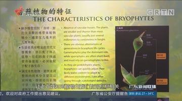 国际植物学大会:小苔藓的大作用