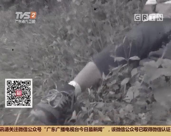 佛山高明:徒步者遭毒蛇咬伤 百人搜救八小时