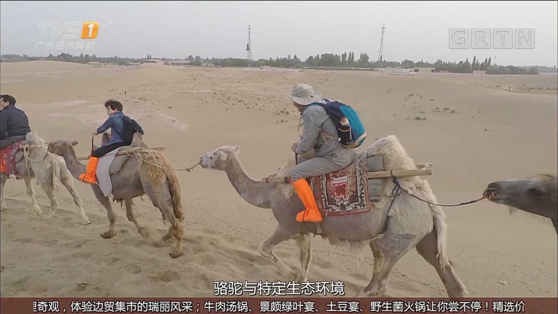甘肃敦煌——骑骆驼