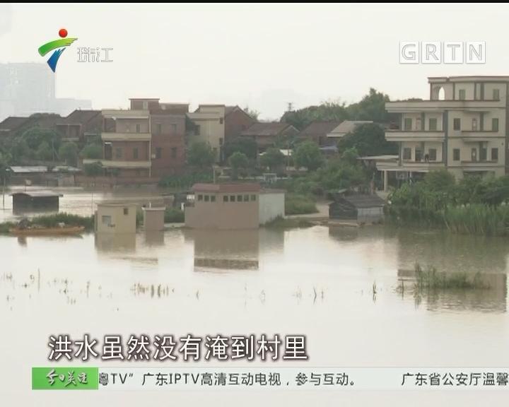 西江洪峰过境 佛山现9年最高水位