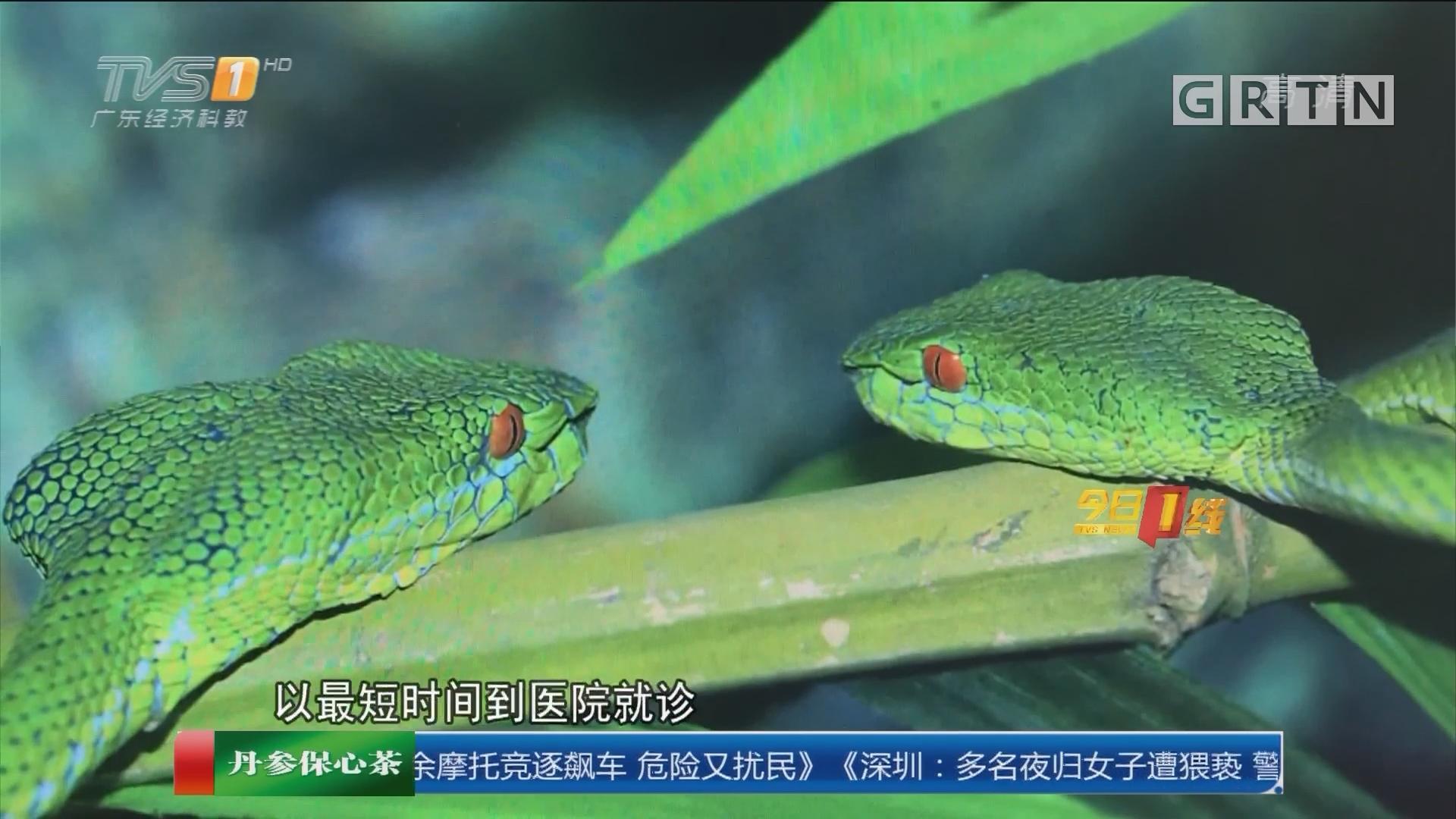 广州花都:阿姨把竹叶青蛇当菜摘回家被咬伤