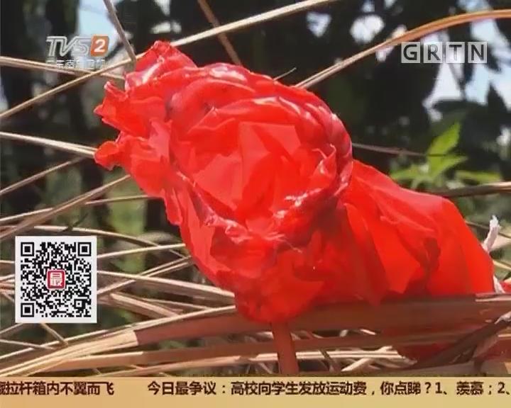 从化:天空飘落氢气球爆炸 老人被烧伤