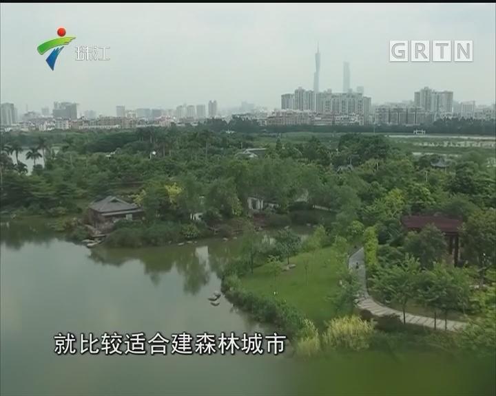 叫响国际花城名片! 广州要建城市中央公园