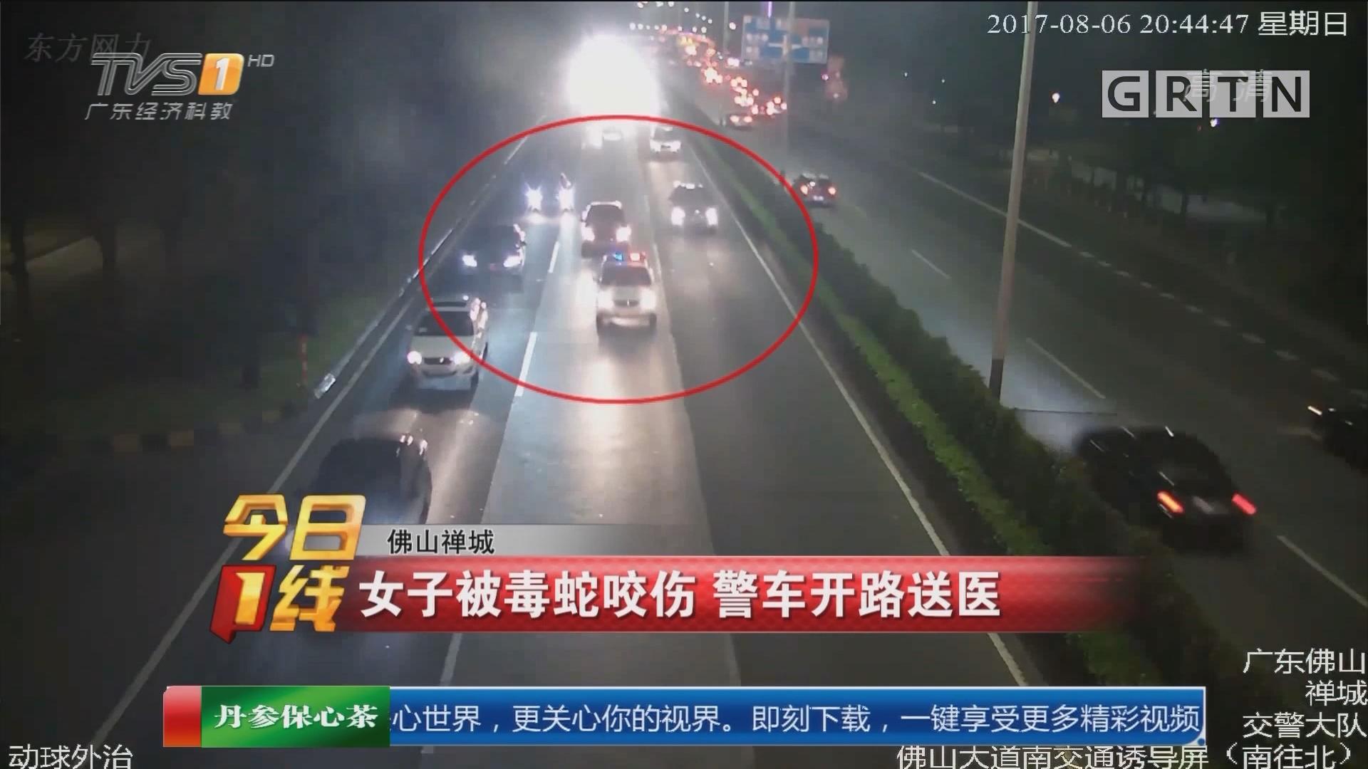 佛山禅城:女子被毒蛇咬伤 警车开路送医