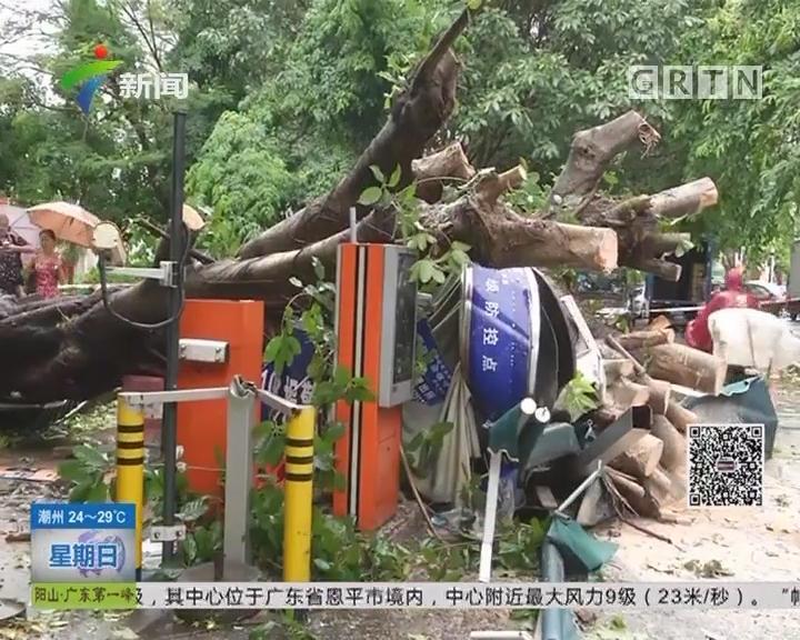 """""""帕卡""""来袭 深圳:大树压收费亭 三名保安受伤"""
