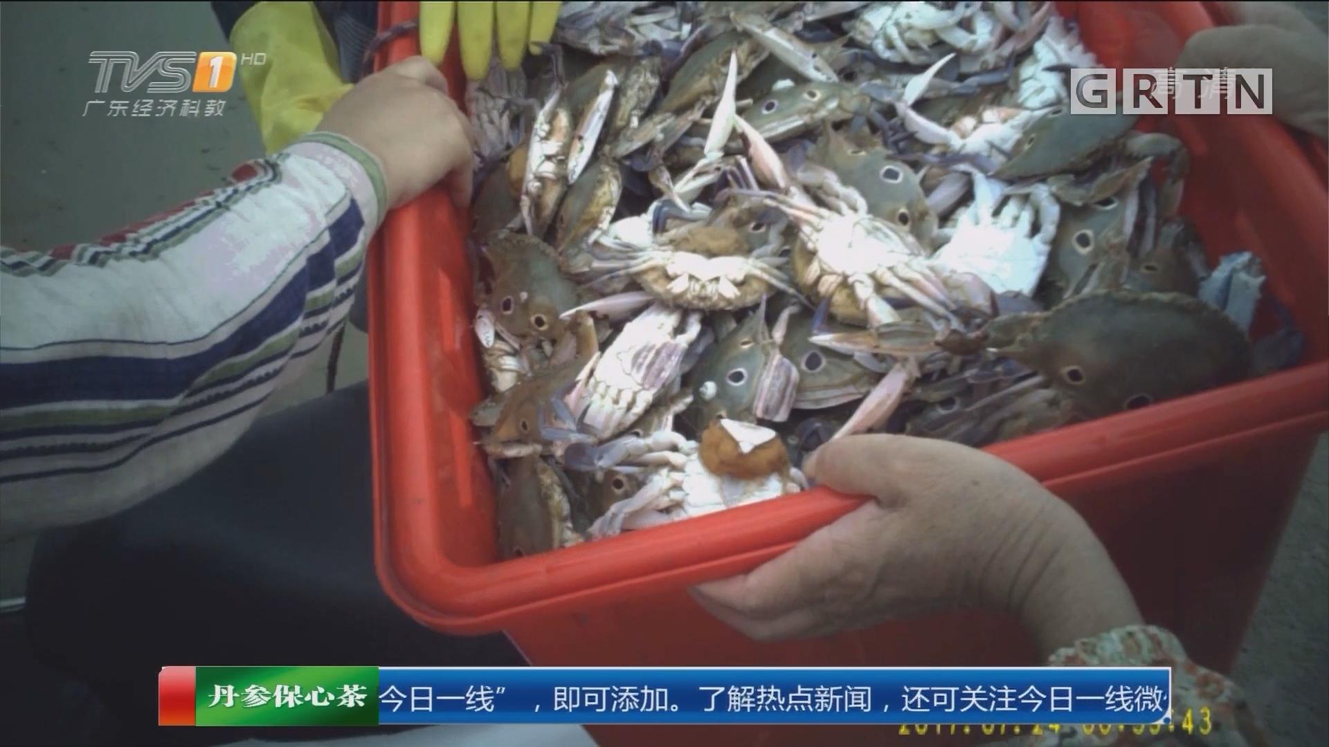 一线独家调查:非法捕鱼 最严休渔期 徐闻码头沙滩海鲜交易火爆