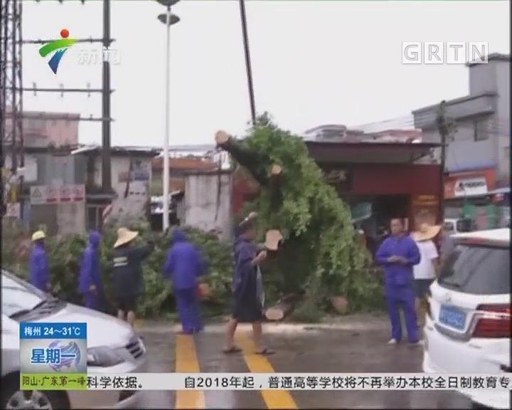 """台风""""帕卡""""过境:佛山 南海大沥水头村遭遇十年一遇强雷雨大风"""