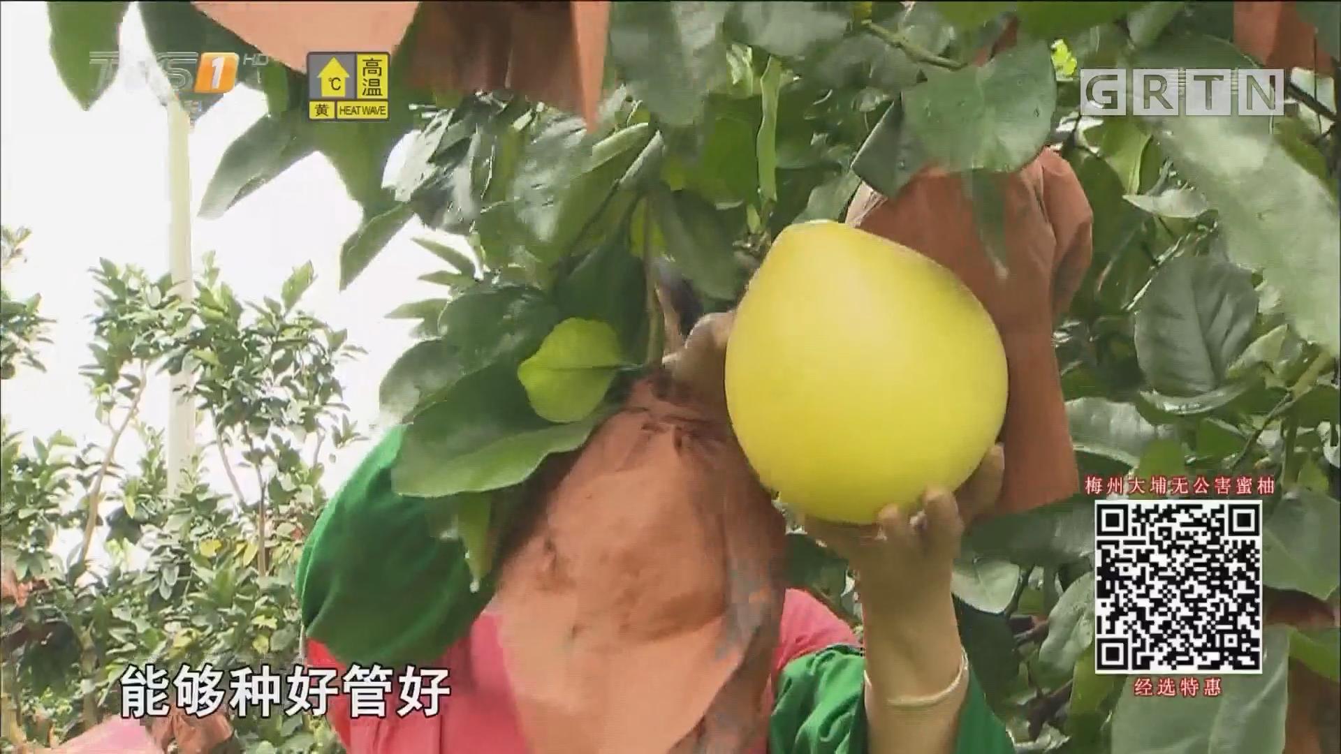 """经选商城:你准备好接下这个""""柚""""惑吗?"""