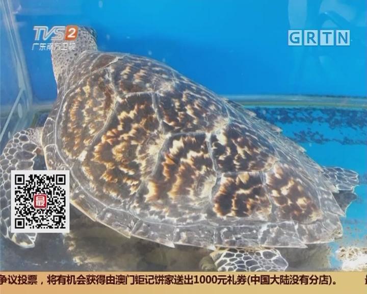 """广州番禺:玳瑁成""""镇店宝"""" 受保护动物当街卖"""