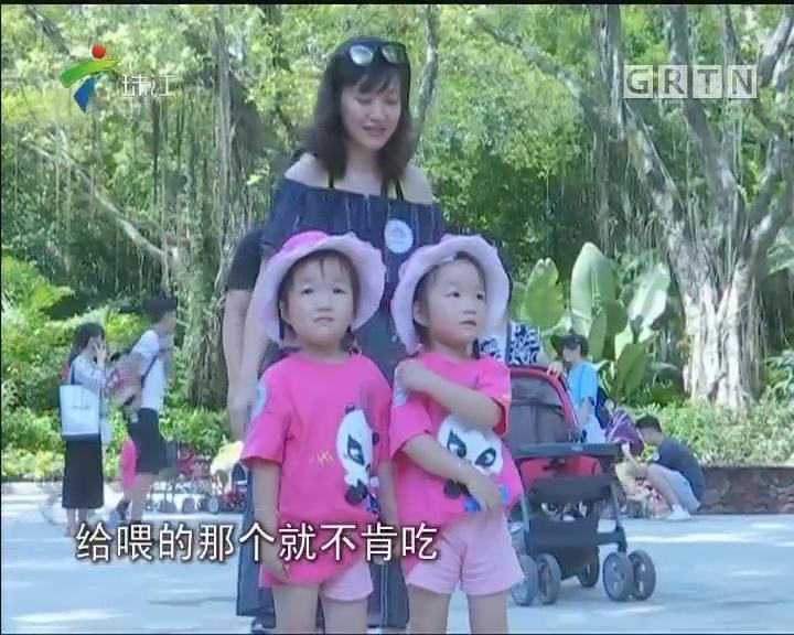 广州:百对双胞胎欢乐游园