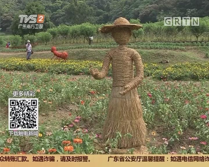 广州从化:近百个稻草人齐亮相