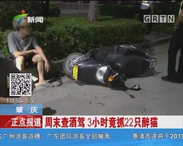 肇庆:周末查酒驾 3小时竟抓22只醉猫
