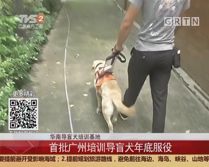 华南导盲犬培训基地:首批广州培训导盲犬年底服役