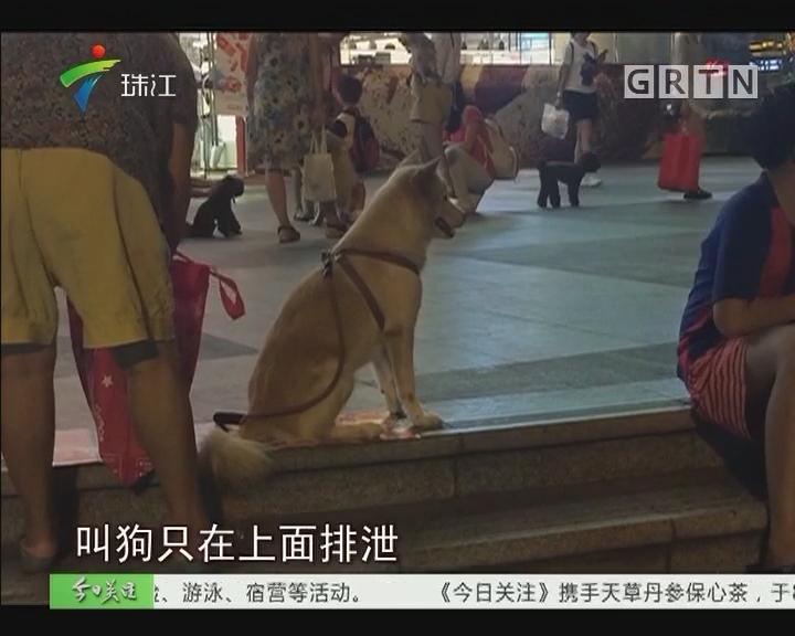 广州严管养犬行为 狗只接种上牌数量激增