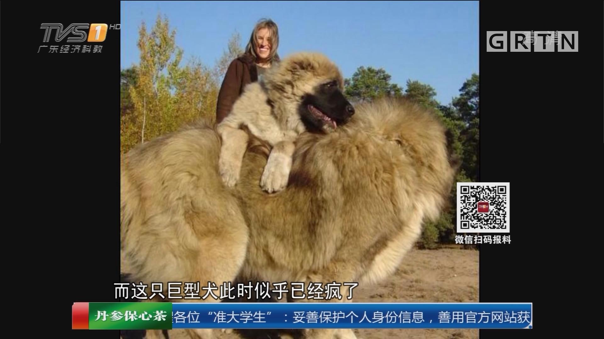 潮州饶平:巨型疯犬冲撞撕咬门窗 3街坊被困