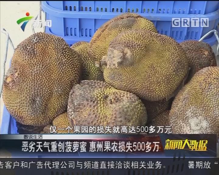 恶劣天气重创菠萝蜜 惠州果农损失500多万