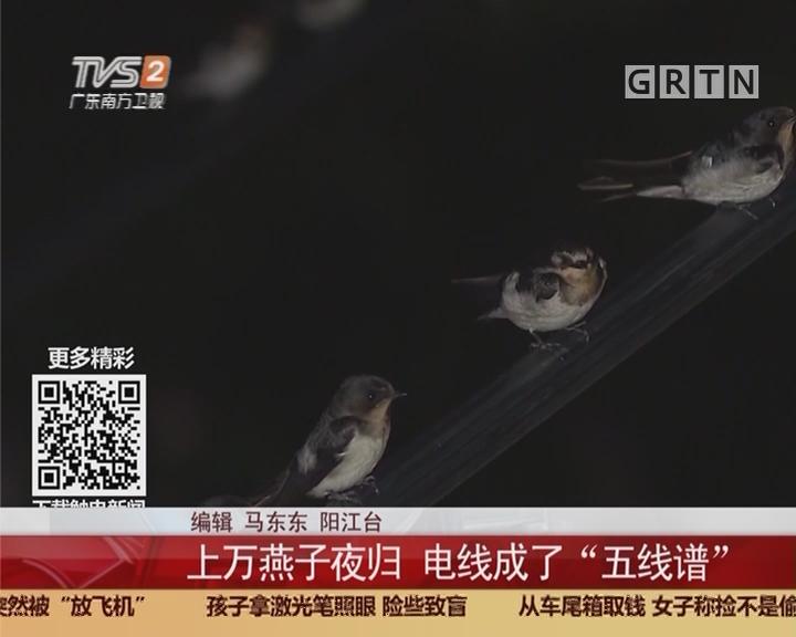 """阳江:上万燕子夜归 电线成了""""五线谱"""""""