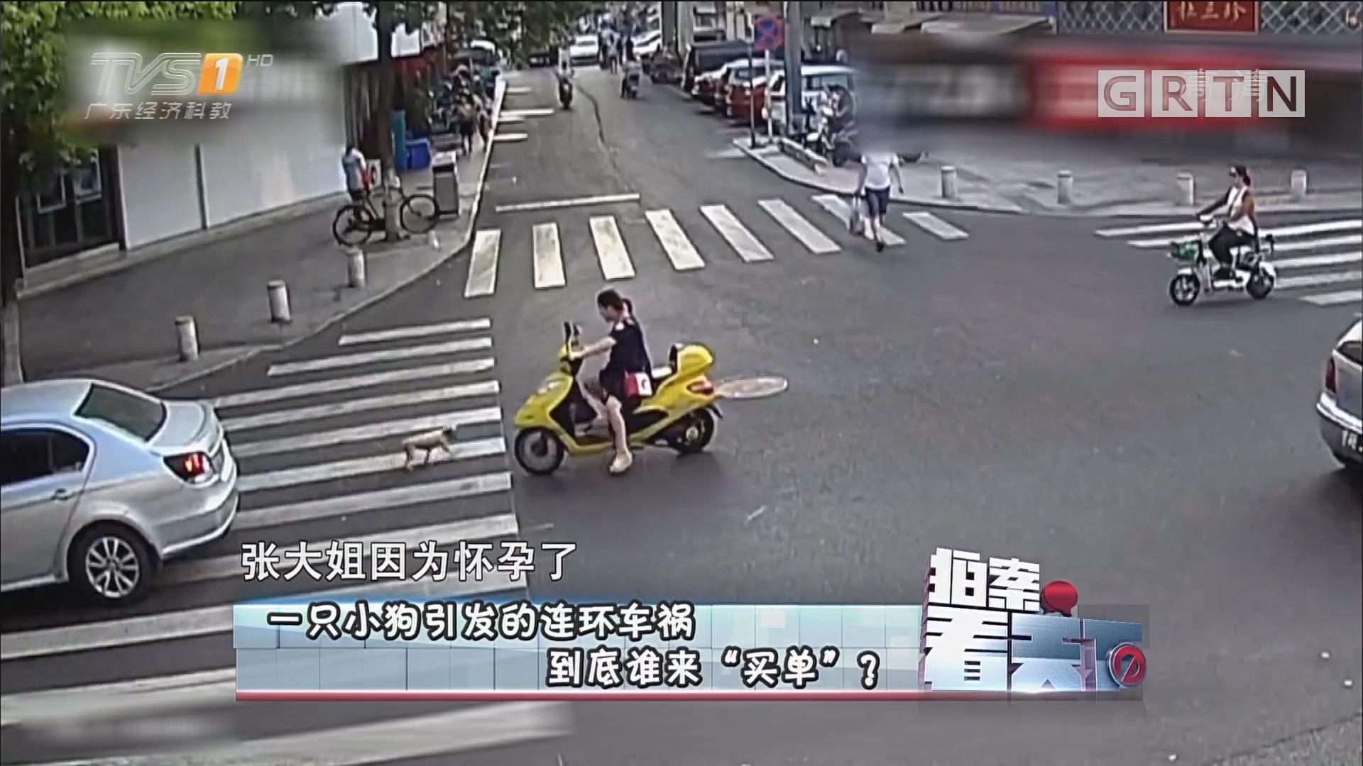 """[HD][2017-08-04]拍案看天下:一只小狗引发的连环车祸 到底谁来""""买单""""?"""