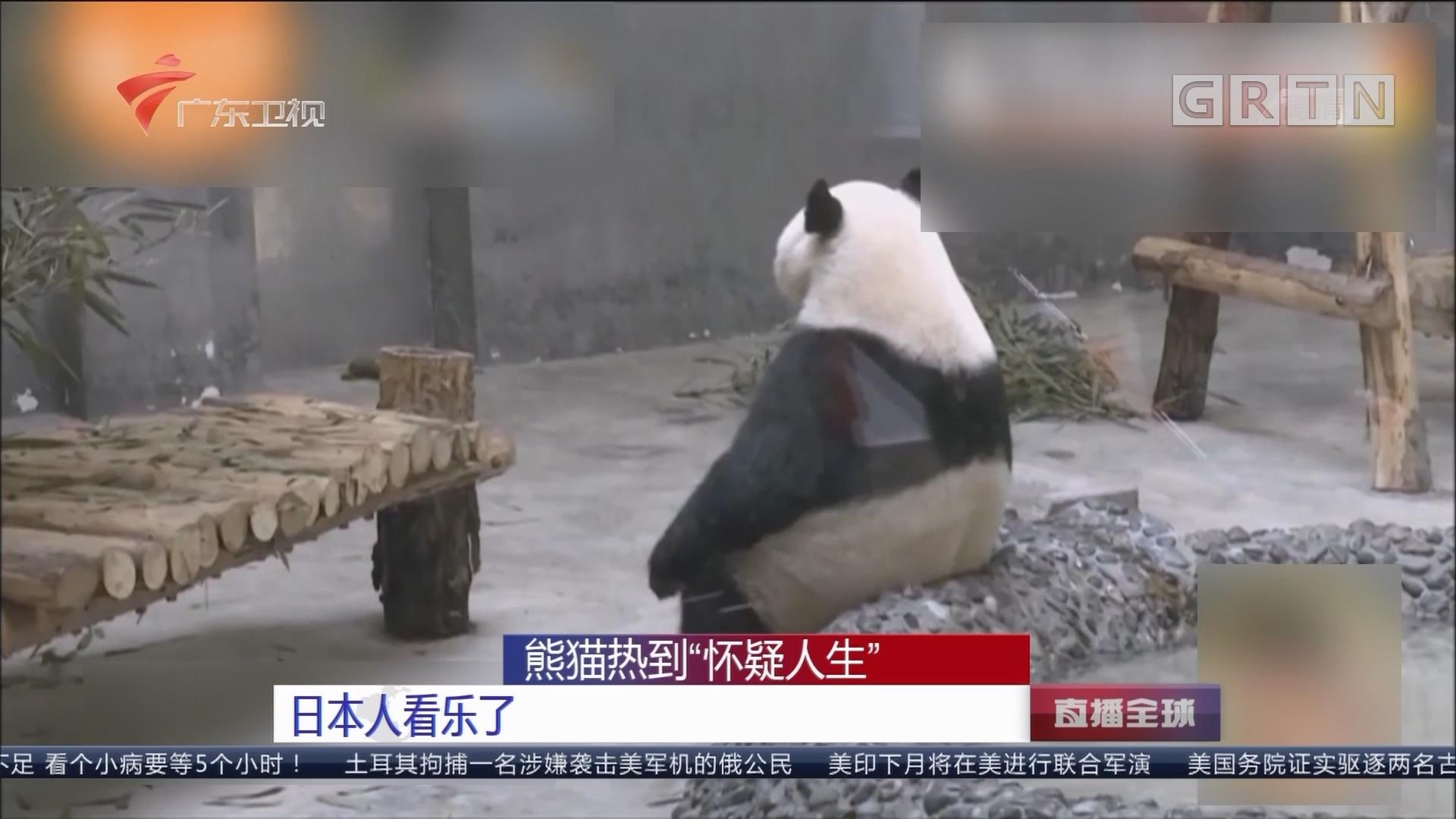 """熊猫热到""""怀疑人生""""日本人看乐了"""